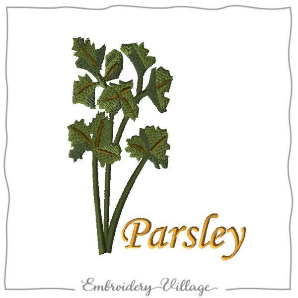 1037-parsley herb-embroideryvillage