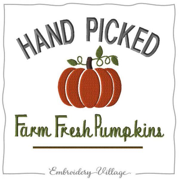 EV1197 handpicked fresh pumpkins